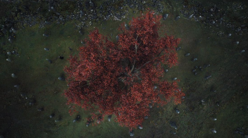 weirwood-tree-got